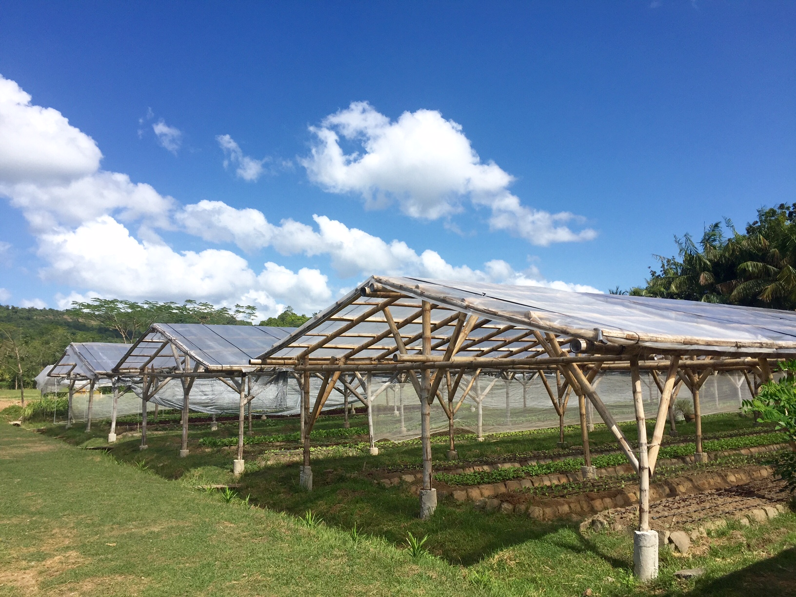 At the Lolo Doc Farm you can purchase freshly picked organic leafy vegetables and herbs.